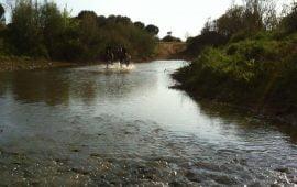 Motivo de Pesca Tablas Solunares de Mairena del Aljarafe