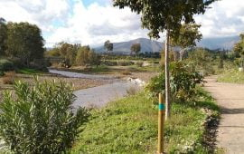 Motivo de Pesca Tablas Solunares de Mijas